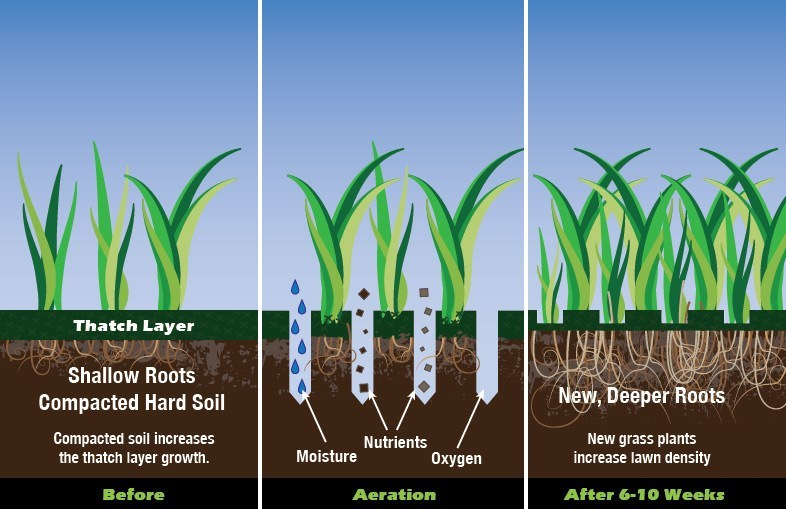 Animation of grass and soil before, during, and after lawn aeration in Colorado Springs